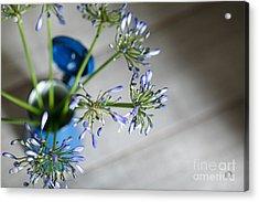 Still Life 05 Acrylic Print by Nailia Schwarz
