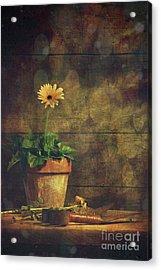 Still Life Of Yellow Gerbera Daisy In Clay Pot Acrylic Print by Sandra Cunningham