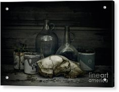 Still Life With Bear Skull Acrylic Print by Priska Wettstein
