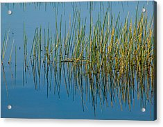Still Water And Grasses Acrylic Print by Rich Franco
