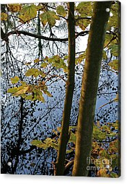 Still Waters In The Fall Acrylic Print by Andy Prendy