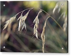 Stillness In The Wind Acrylic Print by Terrie Taylor