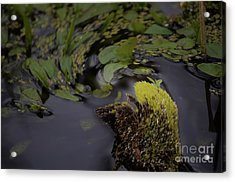 Stirring The Swamp Pot Acrylic Print by The Stone Age