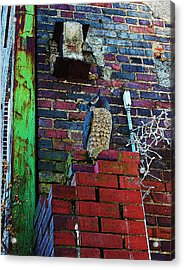 Acrylic Print featuring the photograph Stone Owl by Bob Whitt