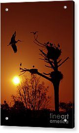 Storks Acrylic Print