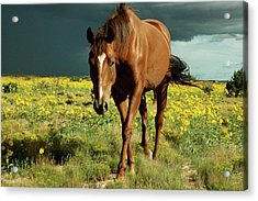 Storm Horse Acrylic Print by photo © Jennifer Esperanza