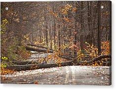 Stormy Autumn Acrylic Print by Karol Livote