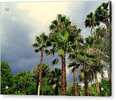 Stormy Skies And Palms Acrylic Print by Sheri McLeroy