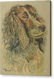 Straight From The Field - Spaniel Portrait Acrylic Print by Richard James Digance