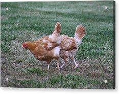 Strange Chicken Acrylic Print