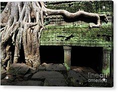 Strangler Fig Tree Roots On Temple Acrylic Print