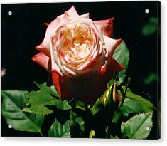 Strawberry Rose Acrylic Print