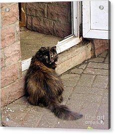 Street Cat Acrylic Print by Yury Bashkin