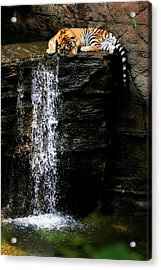 Strength At Rest Acrylic Print
