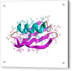 Streptococcal Protein G Molecule Acrylic Print by Laguna Design