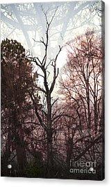 Stretch Acrylic Print by Affini Woodley