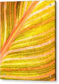 Striped Leaf Acrylic Print by Bonnie Bruno