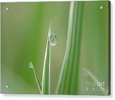 Acrylic Print featuring the photograph Striped Raindrops by Yumi Johnson