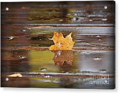 Stuck Maple Leaf Acrylic Print