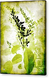 Study In Green Acrylic Print by Judi Bagwell
