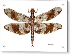 Acrylic Print featuring the painting Study Of A Female Filigree Skimmer by Thom Glace