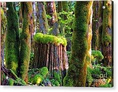 Stump And Moss  Acrylic Print