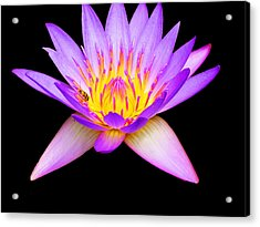 Stunning Waterlily Acrylic Print by Vijay Sharon Govender