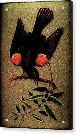 Sturnus Niger Alis Supernis Rubro Colore Acrylic Print by Li   van Saathoff