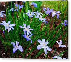 Styling In Blue Acrylic Print by Nancie DeMellia