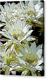 Stylized Cactus Flowers Acrylic Print by Phyllis Denton