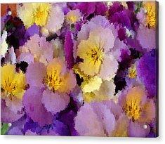 Sugared Pansies Acrylic Print by Georgiana Romanovna