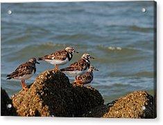 Sullivan's Island Shore Birds Acrylic Print by Melissa Wyatt