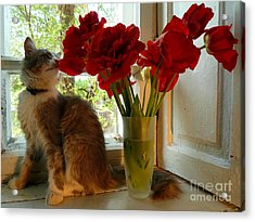 Summer - Cat 1 Acrylic Print by Alisa Tek