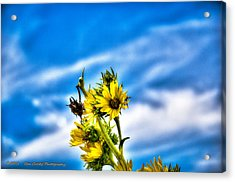 Summer Blooms Acrylic Print by Dan Crosby