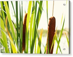 Summer Cattails Acrylic Print by JL Creative  Captures