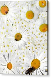 Acrylic Print featuring the photograph Summer Collage With Camomiles And Insects by Aleksandr Volkov