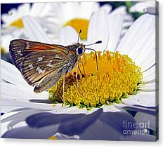 Acrylic Print featuring the photograph Summer Day by Irina Hays