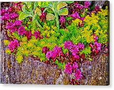 Summer Delight Acrylic Print by Ken Stanback