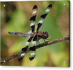 Summer Dragonfly Acrylic Print