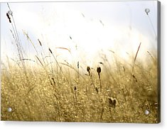Acrylic Print featuring the photograph Summer Field by Emanuel Tanjala