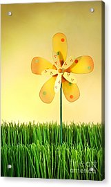 Summer Fun In The Grass Acrylic Print by Sandra Cunningham
