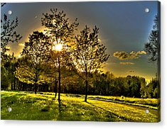 Summer Glow Acrylic Print by Jason Naudi Photography