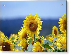 Summer Gold Acrylic Print