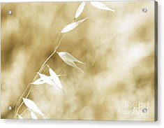 Summer Grass Acrylic Print by Artist and Photographer Laura Wrede