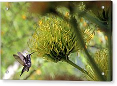 Acrylic Print featuring the photograph Summer Hummer by Jo Sheehan