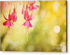 Summer Lov'n Acrylic Print by Beve Brown-Clark Photography