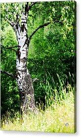 Summer Memory Acrylic Print by Jenny Rainbow