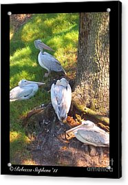 Summer Relaxin Acrylic Print by Rebecca Stephens