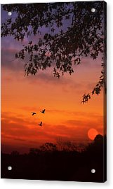 Summer Side Of Life Acrylic Print by Tom York Images
