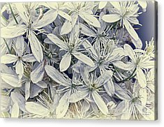 Summer Snow Acrylic Print by Cris Hayes